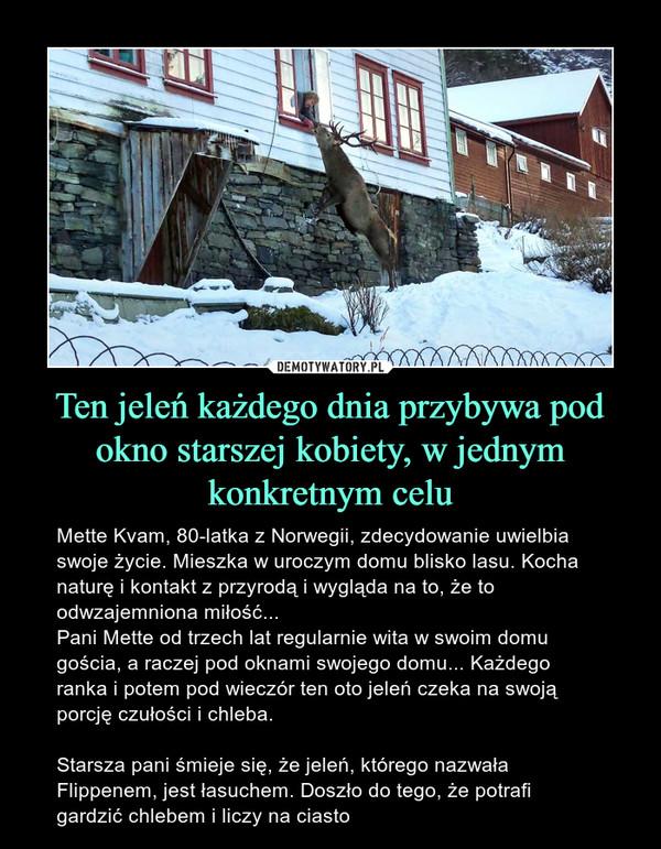 Ten jeleń każdego dnia przybywa pod okno starszej kobiety, w jednym konkretnym celu – Mette Kvam, 80-latka z Norwegii, zdecydowanie uwielbia swoje życie. Mieszka w uroczym domu blisko lasu. Kocha naturę i kontakt z przyrodą i wygląda na to, że to odwzajemniona miłość...Pani Mette od trzech lat regularnie wita w swoim domu gościa, a raczej pod oknami swojego domu... Każdego ranka i potem pod wieczór ten oto jeleń czeka na swoją porcję czułości i chleba.Starsza pani śmieje się, że jeleń, którego nazwała Flippenem, jest łasuchem. Doszło do tego, że potrafi gardzić chlebem i liczy na ciasto