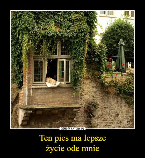 Ten pies ma lepszeżycie ode mnie –