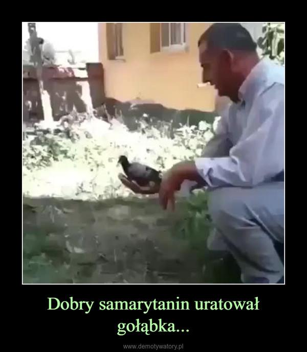Dobry samarytanin uratował gołąbka... –