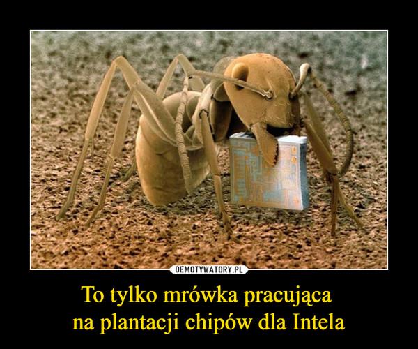 To tylko mrówka pracująca na plantacji chipów dla Intela –