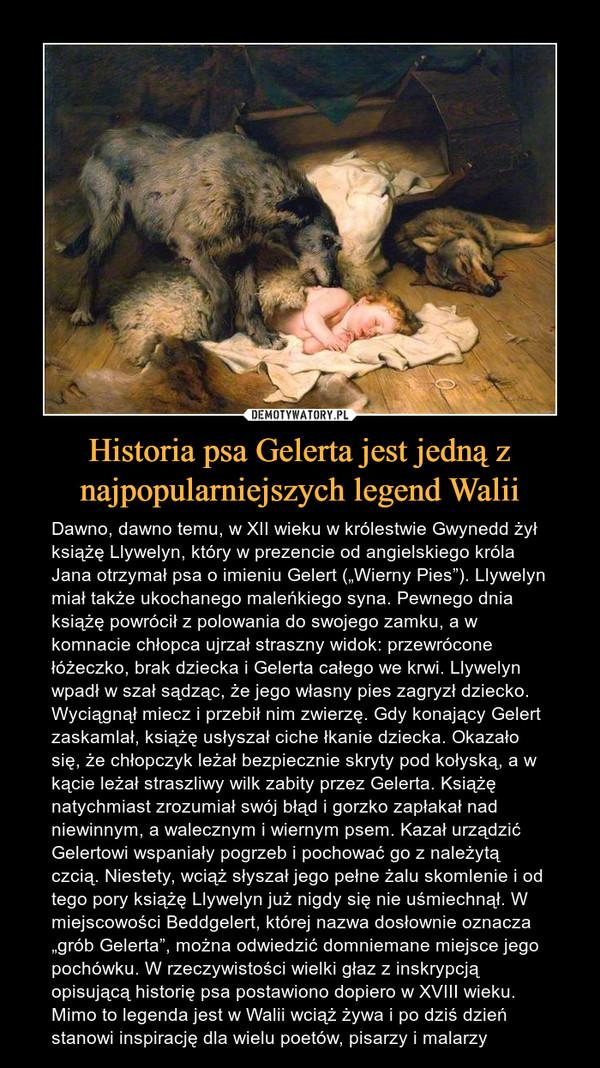 """Historia psa Gelerta jest jedną z najpopularniejszych legend Walii – Dawno, dawno temu, w XII wieku w królestwie Gwynedd żył książę Llywelyn, który w prezencie od angielskiego króla Jana otrzymał psa o imieniu Gelert (""""Wierny Pies""""). Llywelyn miał także ukochanego maleńkiego syna. Pewnego dnia książę powrócił z polowania do swojego zamku, a w komnacie chłopca ujrzał straszny widok: przewrócone łóżeczko, brak dziecka i Gelerta całego we krwi. Llywelyn wpadł w szał sądząc, że jego własny pies zagryzł dziecko. Wyciągnął miecz i przebił nim zwierzę. Gdy konający Gelert zaskamlał, książę usłyszał ciche łkanie dziecka. Okazało się, że chłopczyk leżał bezpiecznie skryty pod kołyską, a w kącie leżał straszliwy wilk zabity przez Gelerta. Książę natychmiast zrozumiał swój błąd i gorzko zapłakał nad niewinnym, a walecznym i wiernym psem. Kazał urządzić Gelertowi wspaniały pogrzeb i pochować go z należytą czcią. Niestety, wciąż słyszał jego pełne żalu skomlenie i od tego pory książę Llywelyn już nigdy się nie uśmiechnął. W miejscowości Beddgelert, której nazwa dosłownie oznacza """"grób Gelerta"""", można odwiedzić domniemane miejsce jego pochówku. W rzeczywistości wielki głaz z inskrypcją opisującą historię psa postawiono dopiero w XVIII wieku. Mimo to legenda jest w Walii wciąż żywa i po dziś dzień stanowi inspirację dla wielu poetów, pisarzy i malarzy"""