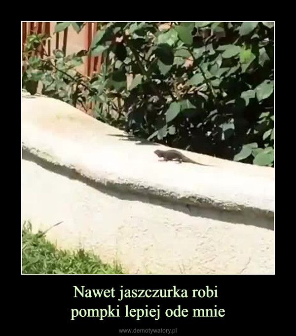 Nawet jaszczurka robi pompki lepiej ode mnie –