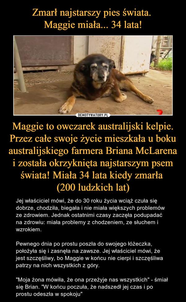 """Maggie to owczarek australijski kelpie. Przez całe swoje życie mieszkała u boku australijskiego farmera Briana McLarena i została okrzyknięta najstarszym psem świata! Miała 34 lata kiedy zmarła (200 ludzkich lat) – Jej właściciel mówi, że do 30 roku życia wciąż czuła się dobrze, chodziła, biegała i nie miała większych problemów ze zdrowiem. Jednak ostatnimi czasy zaczęła podupadać na zdrowiu: miała problemy z chodzeniem, ze słuchem i wzrokiem.Pewnego dnia po prostu poszła do swojego łóżeczka, położyła się i zasnęła na zawsze. Jej właściciel mówi, że jest szczęśliwy, bo Maggie w końcu nie cierpi i szczęśliwa patrzy na nich wszystkich z góry.""""Moja żona mówiła, że ona przeżyje nas wszystkich"""" - śmiał się Brian. """"W końcu poczuła, że nadszedł jej czas i po prostu odeszła w spokoju"""""""