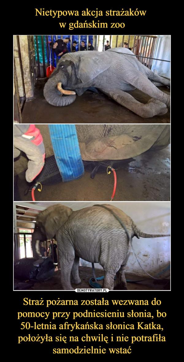 Straż pożarna została wezwana do pomocy przy podniesieniu słonia, bo 50-letnia afrykańska słonica Katka, położyła się na chwilę i nie potrafiła samodzielnie wstać –