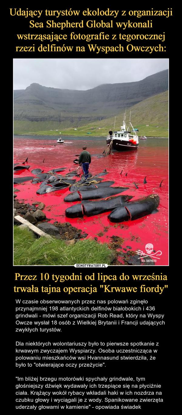 """Przez 10 tygodni od lipca do września trwała tajna operacja """"Krwawe fiordy"""" – W czasie obserwowanych przez nas polowań zginęło przynajmniej 198 atlantyckich delfinów białobokich i 436 grindwali - mówi szef organizacji Rob Read, który na Wyspy Owcze wysłał 18 osób z Wielkiej Brytanii i Francji udających zwykłych turystów.Dla niektórych wolontariuszy było to pierwsze spotkanie z krwawym zwyczajem Wyspiarzy. Osoba uczestnicząca w polowaniu mieszkańców wsi Hvannasund stwierdziła, że było to """"otwierające oczy przeżycie"""".""""Im bliżej brzegu motorówki spychały grindwale, tym głośniejszy dźwięk wydawały ich trzepiące się na płyciźnie ciała. Krążący wokół rybacy wkładali haki w ich nozdrza na czubku głowy i wyciągali je z wody. Spanikowane zwierzęta uderzały głowami w kamienie"""" - opowiada świadek"""