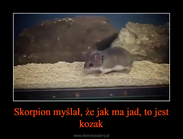 Skorpion myślał, że jak ma jad, to jest kozak –