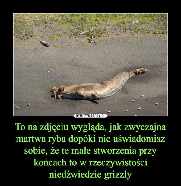 To na zdjęciu wygląda, jak zwyczajna martwa ryba dopóki nie uświadomisz sobie, że te małe stworzenia przy końcach to w rzeczywistości niedźwiedzie grizzly –