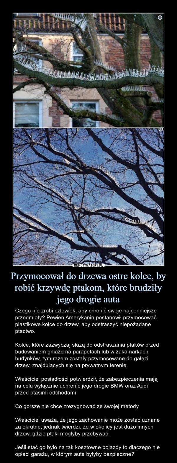 Przymocował do drzewa ostre kolce, by robić krzywdę ptakom, które brudziły jego drogie auta – Czego nie zrobi człowiek, aby chronić swoje najcenniejsze przedmioty? Pewien Amerykanin postanowił przymocować plastikowe kolce do drzew, aby odstraszyć niepożądane ptactwo.Kolce, które zazwyczaj służą do odstraszania ptaków przed budowaniem gniazd na parapetach lub w zakamarkach budynków, tym razem zostały przymocowane do gałęzi drzew, znajdujących się na prywatnym terenie.Właściciel posiadłości potwierdził, że zabezpieczenia mają na celu wyłącznie uchronić jego drogie BMW oraz Audi przed ptasimi odchodamiCo gorsze nie chce zrezygnować ze swojej metodyWłaściciel uważa, że jego zachowanie może zostać uznane za okrutne, jednak twierdzi, że w okolicy jest dużo innych drzew, gdzie ptaki mogłyby przebywać.Jeśli stać go było na tak kosztowne pojazdy to dlaczego nie opłaci garażu, w którym auta byłyby bezpieczne?