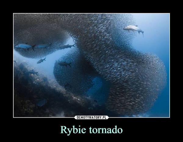 Rybie tornado –