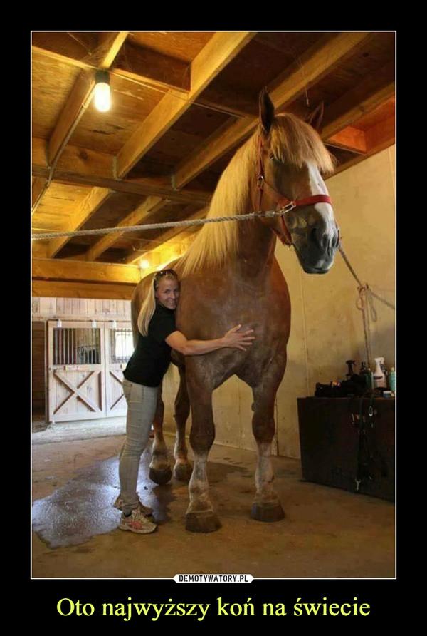 Oto najwyższy koń na świecie –