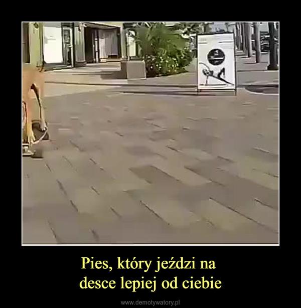 Pies, który jeździ na desce lepiej od ciebie –