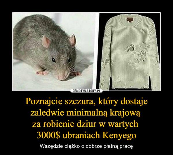 Poznajcie szczura, który dostaje zaledwie minimalną krajową za robienie dziur w wartych 3000$ ubraniach Kenyego – Wszędzie ciężko o dobrze płatną pracę