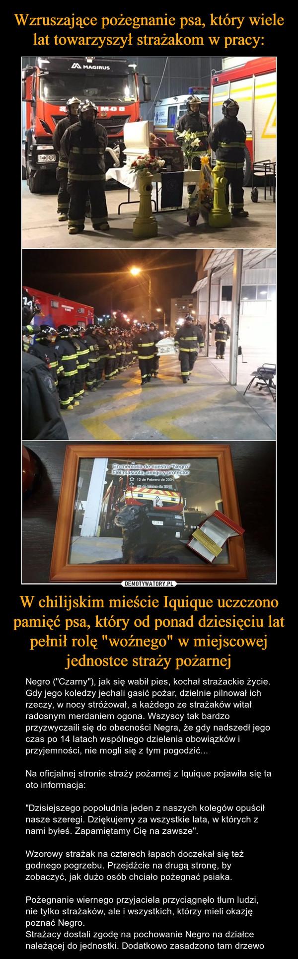 """W chilijskim mieście Iquique uczczono pamięć psa, który od ponad dziesięciu lat pełnił rolę """"woźnego"""" w miejscowej jednostce straży pożarnej – Negro (""""Czarny""""), jak się wabił pies, kochał strażackie życie. Gdy jego koledzy jechali gasić pożar, dzielnie pilnował ich rzeczy, w nocy stróżował, a każdego ze strażaków witał radosnym merdaniem ogona. Wszyscy tak bardzo przyzwyczaili się do obecności Negra, że gdy nadszedł jego czas po 14 latach wspólnego dzielenia obowiązków i przyjemności, nie mogli się z tym pogodzić...Na oficjalnej stronie straży pożarnej z Iquique pojawiła się ta oto informacja: """"Dzisiejszego popołudnia jeden z naszych kolegów opuścił nasze szeregi. Dziękujemy za wszystkie lata, w których z nami byłeś. Zapamiętamy Cię na zawsze"""". Wzorowy strażak na czterech łapach doczekał się też godnego pogrzebu. Przejdźcie na drugą stronę, by zobaczyć, jak dużo osób chciało pożegnać psiaka.Pożegnanie wiernego przyjaciela przyciągnęło tłum ludzi, nie tylko strażaków, ale i wszystkich, którzy mieli okazję poznać Negro.Strażacy dostali zgodę na pochowanie Negro na działce należącej do jednostki. Dodatkowo zasadzono tam drzewo"""