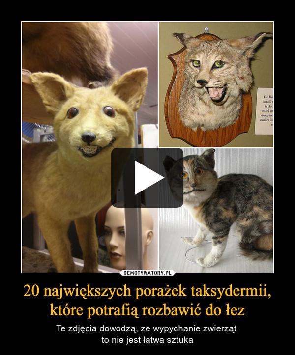 20 największych porażek taksydermii, które potrafią rozbawić do łez – Te zdjęcia dowodzą, ze wypychanie zwierząt to nie jest łatwa sztuka