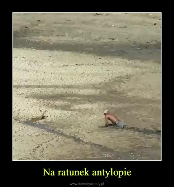 Na ratunek antylopie –