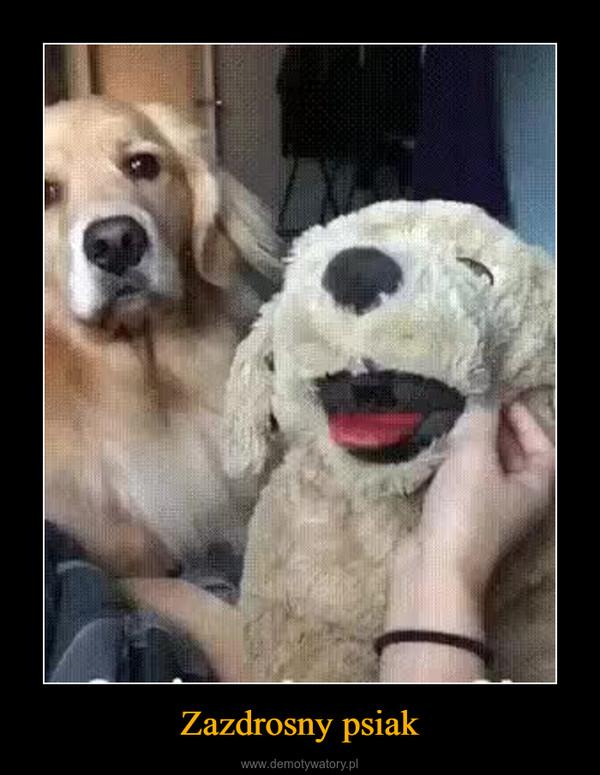 Zazdrosny psiak –