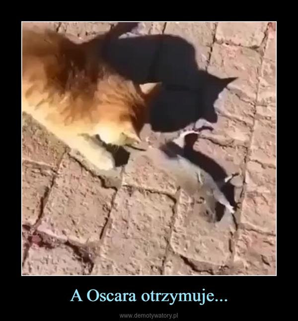 A Oscara otrzymuje... –