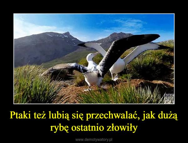 Ptaki też lubią się przechwalać, jak dużą rybę ostatnio złowiły –