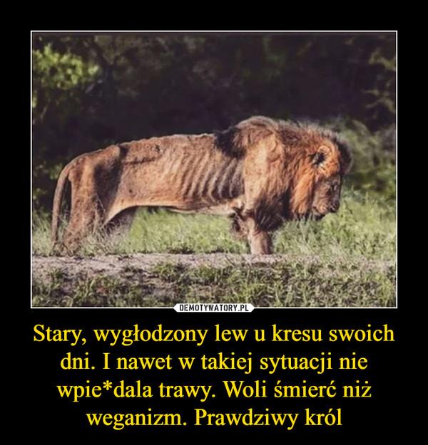Stary, wygłodzony lew u kresu swoich dni. I nawet w takiej sytuacji nie wpie*dala trawy. Woli śmierć niż weganizm. Prawdziwy król –