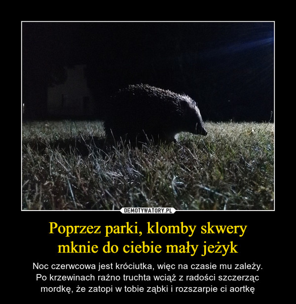 Poprzez parki, klomby skwerymknie do ciebie mały jeżyk – Noc czerwcowa jest króciutka, więc na czasie mu zależy.Po krzewinach raźno truchta wciąż z radości szczerzącmordkę, że zatopi w tobie ząbki i rozszarpie ci aortkę