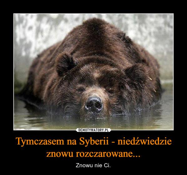 Tymczasem na Syberii - niedźwiedzie znowu rozczarowane... – Znowu nie Ci.