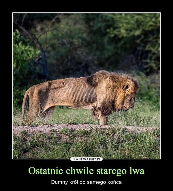 Ostatnie chwile starego lwa – Dumny król do samego końca