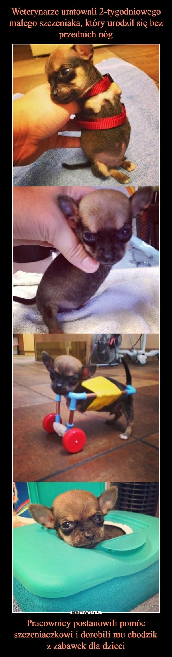Pracownicy postanowili pomóc szczeniaczkowi i dorobili mu chodzikz zabawek dla dzieci –