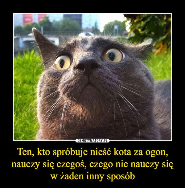 Ten, kto spróbuje nieść kota za ogon, nauczy się czegoś, czego nie nauczy się w żaden inny sposób –