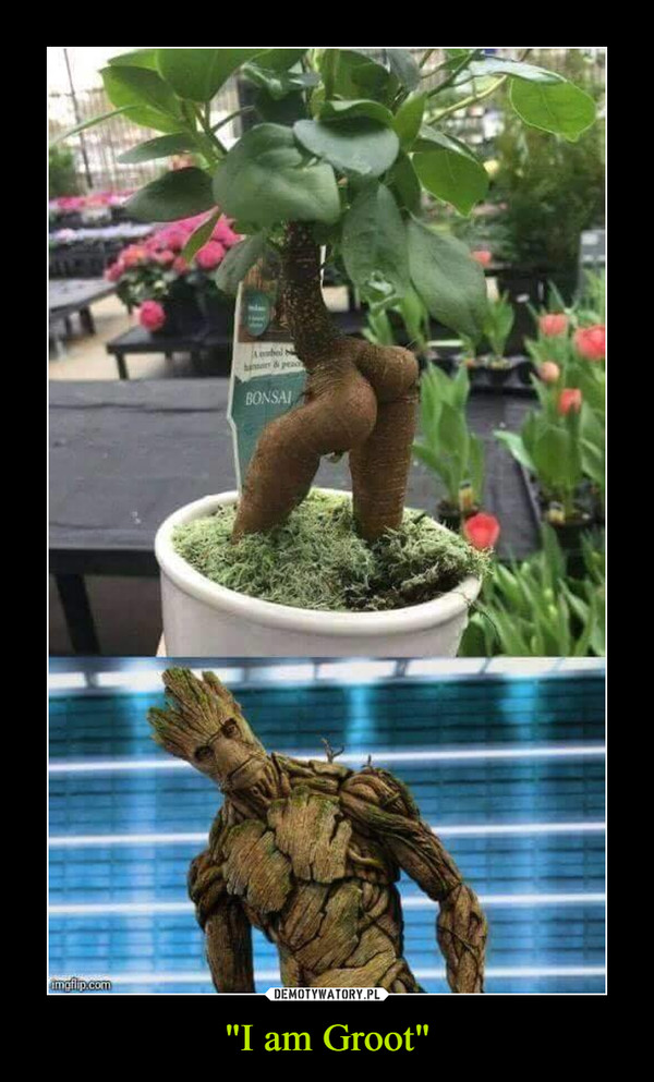 """""""I am Groot"""" –"""
