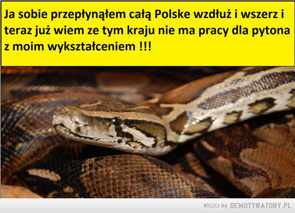 Pyton z Warszawy –