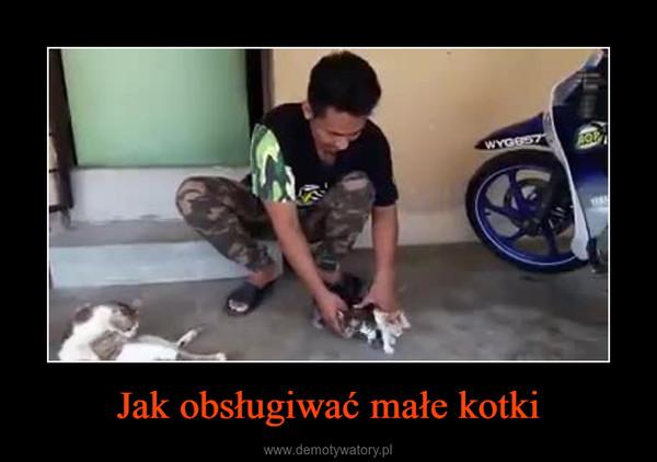 Jak obsługiwać małe kotki –