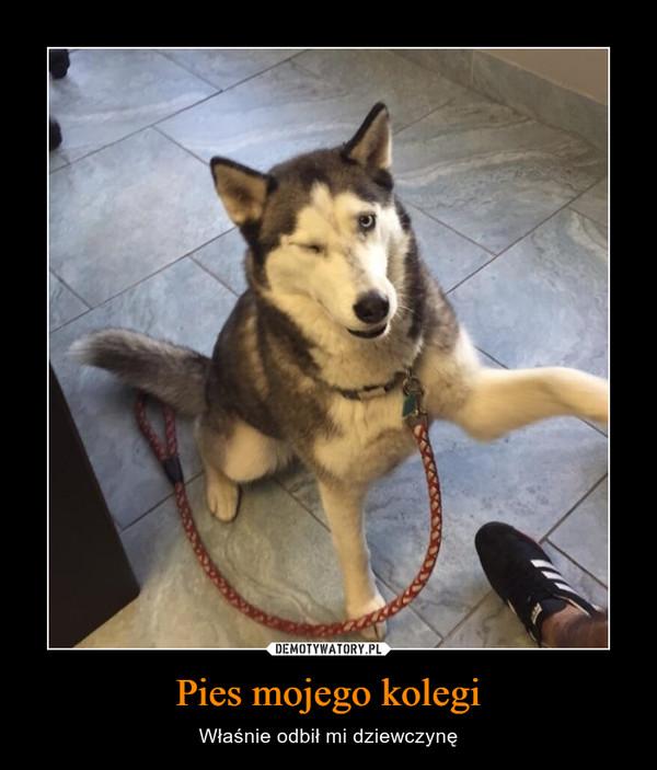 Pies mojego kolegi – Właśnie odbił mi dziewczynę