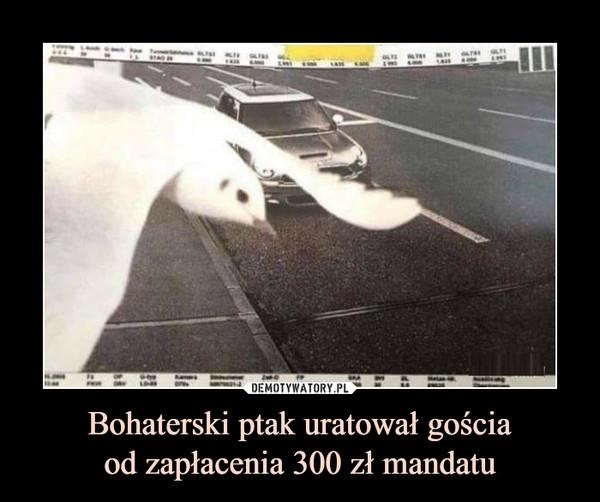 Bohaterski ptak uratował gościaod zapłacenia 300 zł mandatu –
