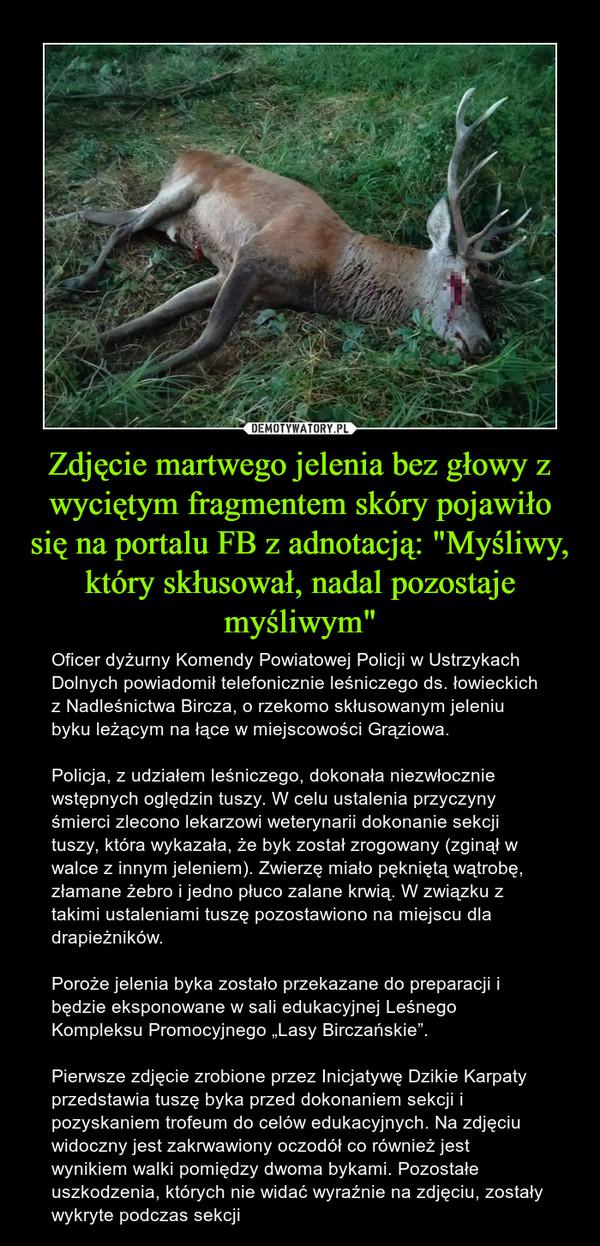 """Zdjęcie martwego jelenia bez głowy z wyciętym fragmentem skóry pojawiło się na portalu FB z adnotacją: """"Myśliwy, który skłusował, nadal pozostaje myśliwym"""" – Oficer dyżurny Komendy Powiatowej Policji w Ustrzykach Dolnych powiadomił telefonicznie leśniczego ds. łowieckich z Nadleśnictwa Bircza, o rzekomo skłusowanym jeleniu byku leżącym na łące w miejscowości Grąziowa.Policja, z udziałem leśniczego, dokonała niezwłocznie wstępnych oględzin tuszy. W celu ustalenia przyczyny śmierci zlecono lekarzowi weterynarii dokonanie sekcji tuszy, która wykazała, że byk został zrogowany (zginął w walce z innym jeleniem). Zwierzę miało pękniętą wątrobę, złamane żebro i jedno płuco zalane krwią. W związku z takimi ustaleniami tuszę pozostawiono na miejscu dla drapieżników.Poroże jelenia byka zostało przekazane do preparacji i będzie eksponowane w sali edukacyjnej Leśnego Kompleksu Promocyjnego """"Lasy Birczańskie"""".Pierwsze zdjęcie zrobione przez Inicjatywę Dzikie Karpaty przedstawia tuszę byka przed dokonaniem sekcji i pozyskaniem trofeum do celów edukacyjnych. Na zdjęciu widoczny jest zakrwawiony oczodół co również jest wynikiem walki pomiędzy dwoma bykami. Pozostałe uszkodzenia, których nie widać wyraźnie na zdjęciu, zostały wykryte podczas sekcji"""
