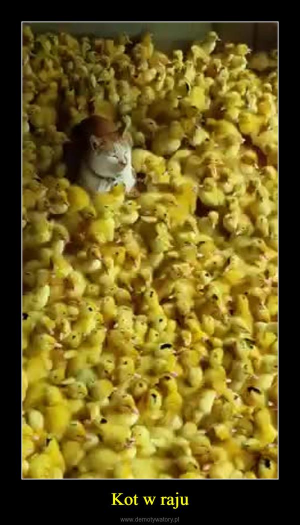 Kot w raju –