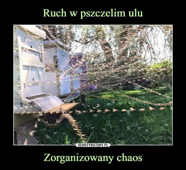 Zorganizowany chaos –