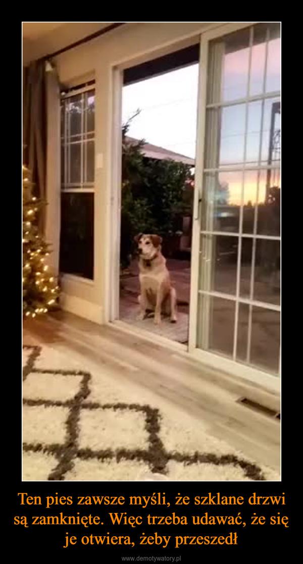 Ten pies zawsze myśli, że szklane drzwi są zamknięte. Więc trzeba udawać, że się je otwiera, żeby przeszedł –