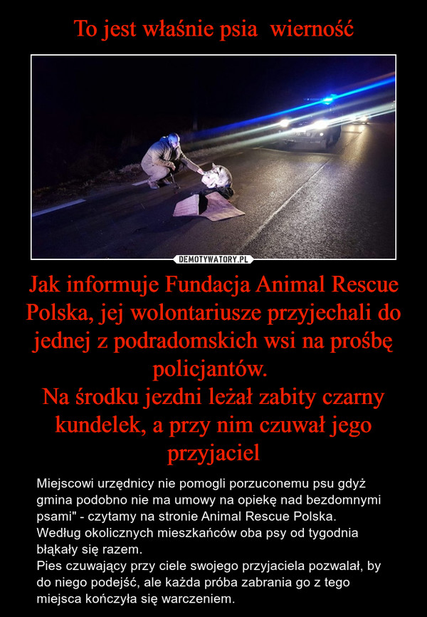 """Jak informuje Fundacja Animal Rescue Polska, jej wolontariusze przyjechali do jednej z podradomskich wsi na prośbę policjantów. Na środku jezdni leżał zabity czarny kundelek, a przy nim czuwał jego przyjaciel – Miejscowi urzędnicy nie pomogli porzuconemu psu gdyż gmina podobno nie ma umowy na opiekę nad bezdomnymi psami"""" - czytamy na stronie Animal Rescue Polska. Według okolicznych mieszkańców oba psy od tygodnia błąkały się razem. Pies czuwający przy ciele swojego przyjaciela pozwalał, by do niego podejść, ale każda próba zabrania go z tego miejsca kończyła się warczeniem."""