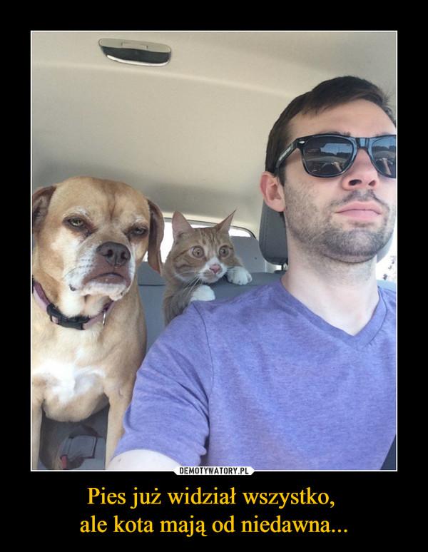 Pies już widział wszystko, ale kota mają od niedawna... –