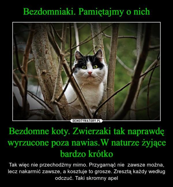 Bezdomne koty. Zwierzaki tak naprawdę wyrzucone poza nawias.W naturze żyjące bardzo krótko – Tak więc nie przechodźmy mimo. Przygarnąć nie  zawsze można, lecz nakarmić zawsze, a kosztuje to grosze. Zresztą każdy według odczuć. Taki skromny apel