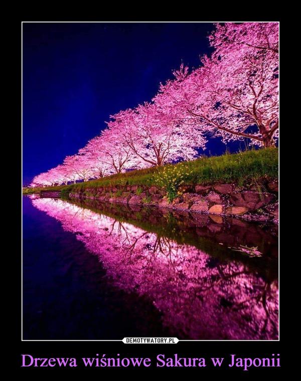 Drzewa wiśniowe Sakura w Japonii –