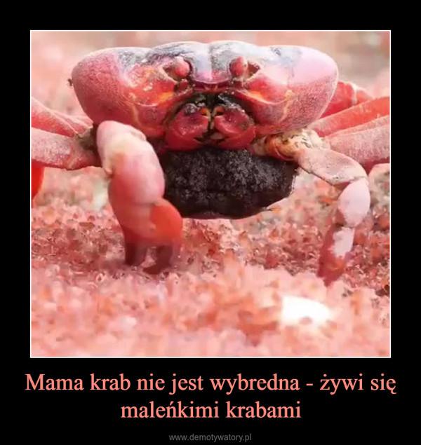 Mama krab nie jest wybredna - żywi się maleńkimi krabami –