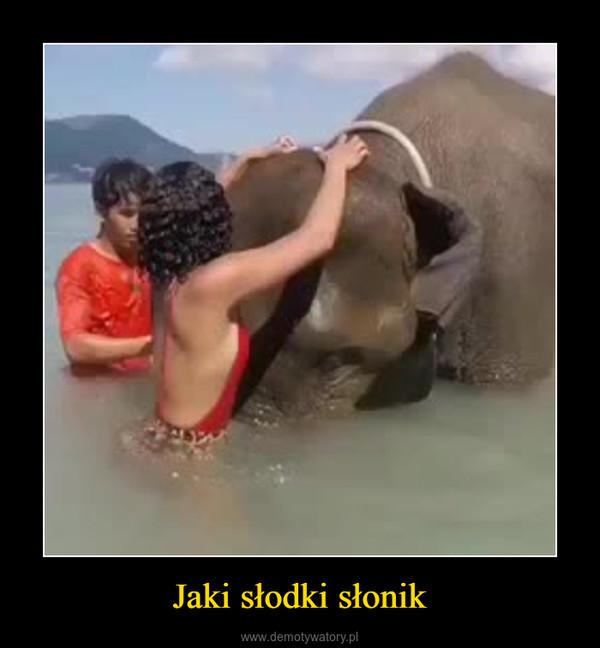Jaki słodki słonik –