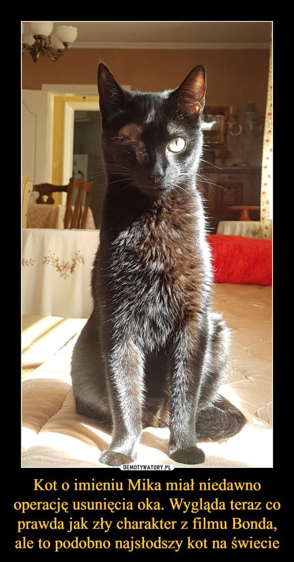 Kot o imieniu Mika miał niedawno operację usunięcia oka. Wygląda teraz co prawda jak zły charakter z filmu Bonda, ale to podobno najsłodszy kot na świecie –