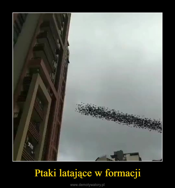 Ptaki latające w formacji –