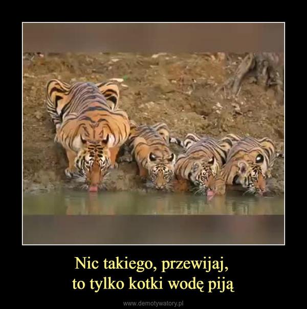 Nic takiego, przewijaj, to tylko kotki wodę piją –