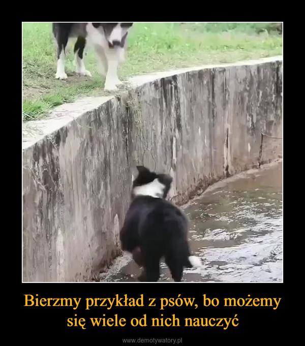 Bierzmy przykład z psów, bo możemy się wiele od nich nauczyć –