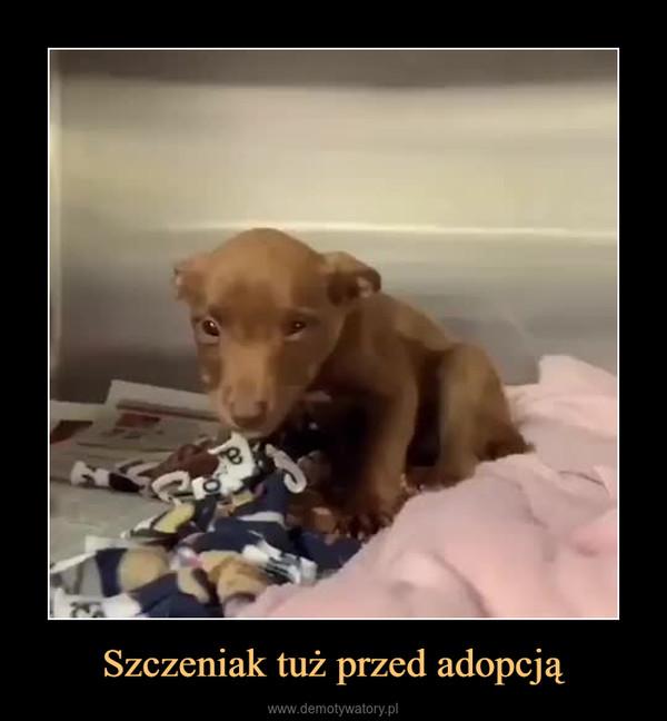 Szczeniak tuż przed adopcją –