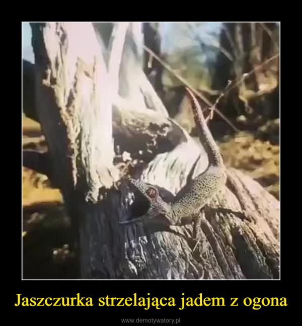 Jaszczurka strzelająca jadem z ogona –