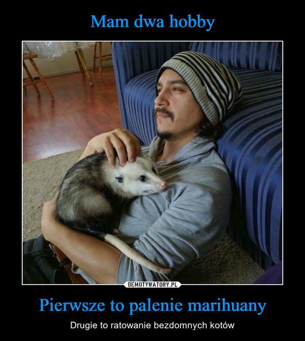 Pierwsze to palenie marihuany – Drugie to ratowanie bezdomnych kotów